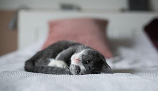 睡眠の質が向上したきっかけ