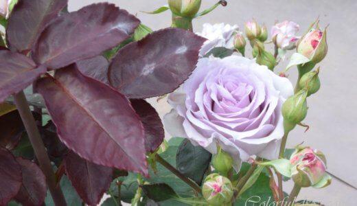 神代植物公園「春のバラフェスタ」へ行ってみました