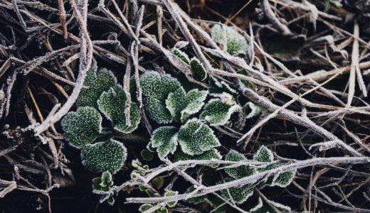 七十二候『地始凍』