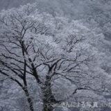 二十四節気『大雪』・七十二候『閉塞成冬』