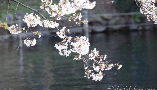 お花見散歩と賑わう街