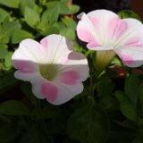 お花の成長に癒やされる日々