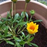 お天気と気温の変化そしてお花の暮らし
