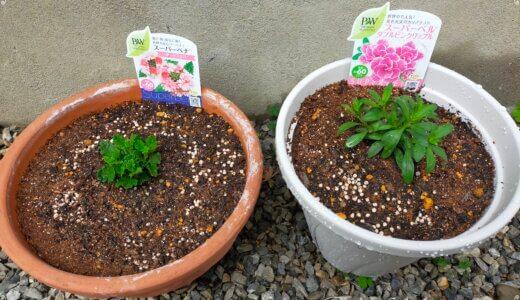 春夏~秋の苗を植えました