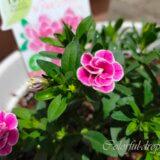 かわいらしい小さなお花たち